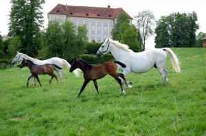 Graz And Styria Tour – Culture And Nature In Perfect Symbiose Packages