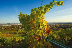 Beethoven Walk Tour- Kahlenberg, Nussdorf, Heiligenstadt Packages